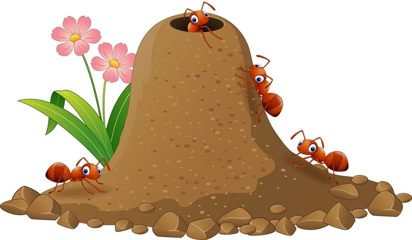 Get Rid of Ants Colonies Effectively