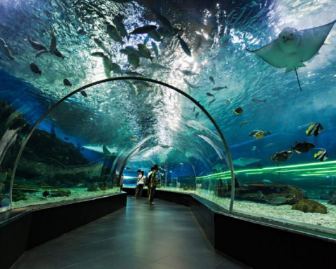 Dubai Aquarium and Underwater Zoo Tickets Offers