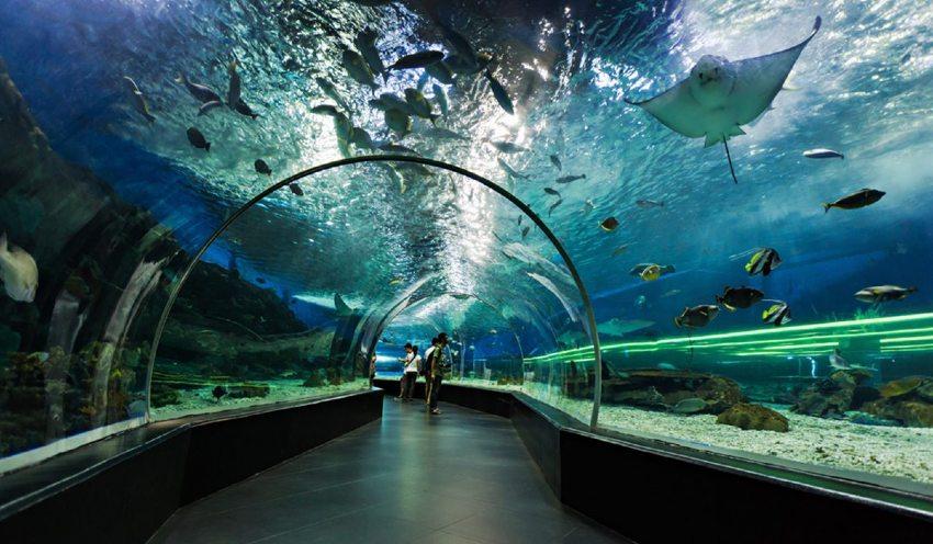 Dubai Aquarium and Underwater Zoo Tickets Offers