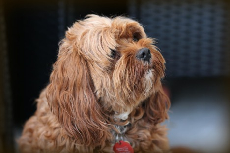 Choose the right dog breed