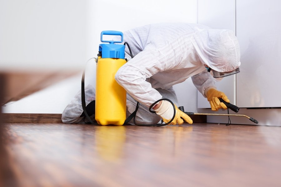 How to Find Best Pest Control Experts in Your Area
